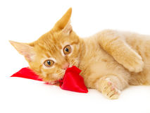 Young redhead cat lies on the floor in the red ribbon Stock Photos