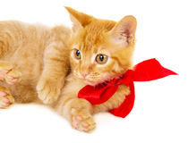 Young redhead kitty is on the floor Royalty Free Stock Photo