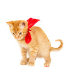 Young redhead kitty Royalty Free Stock Images