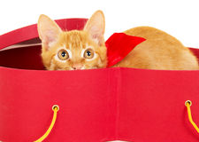 Young redhead kitty sits in a box Royalty Free Stock Image