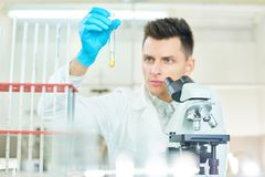 Young Researcher Concentrated on Work. Confident young researcher wearing rubber gloves and white coat sitting at laboratory bench and studying content of test Royalty Free Stock Images