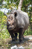 Young Rhinoceros Stock Photos