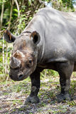 Young Rhinoceros stock images