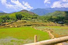 Young rice field with mountain background Stock Photos
