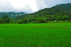 Young rice field among valley,BoKua,Nan,Thailand Stock Photo