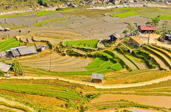 Young rice terraced fields Stock Photography