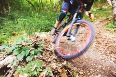 Sport. A cyclist on a bike with a mountain bike in the forest royalty free stock photography