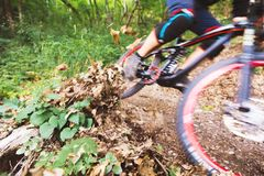Sport. A cyclist on a bike with a mountain bike in the forest royalty free stock images