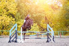 Young rider girl on bay horse jumping over barrier Royalty Free Stock Images