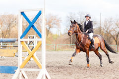 Young rider girl on horse trotting on show jumping Royalty Free Stock Image