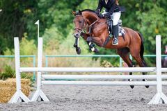 Young rider girl jumping on horse over obstacle. On show jumping competition stock photo