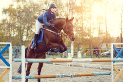 Young rider girl at show jumping. Jump hurdle. Young rider girl at show jumping. Horse rider jumps over hurdle Royalty Free Stock Photography