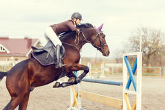 Young rider girl at show jumping. Jump hurdle. Young rider girl at show jumping. Horse rider jumps over hurdle Royalty Free Stock Image
