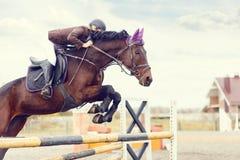 Young rider girl at show jumping. Jump hurdle Stock Photos