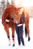 Young rider girl standing with horse in sunbeams. Young rider girl standing with bay horse in sunset beams Royalty Free Stock Photo