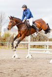 Young rider on horse on show jumping competition. Young rider on bay horse on show jumping competition Stock Image