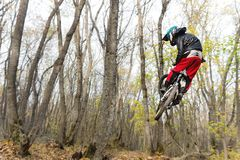 A young rider at the wheel of his mountain bike makes a trick in jumping on the springboard of the downhill mountain Royalty Free Stock Photo