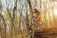 A young rider at the wheel of his mountain bike makes a trick in jumping on the springboard of the downhill mountain Royalty Free Stock Photography