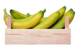 Young ripe banana in case Stock Photos