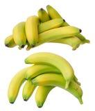 Young ripe banana Stock Image