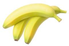 Young ripe banana Royalty Free Stock Image