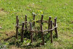Young rose plant without flowers planted in garden surrounded with small improvised wooden fence stock images
