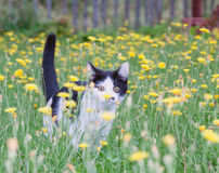 Young rustic cat on lawn royalty free stock image
