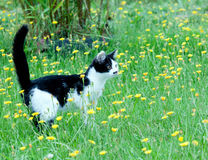 Young rustic cat on lawn royalty free stock photography