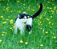 Young rustic cat on the royalty free stock images