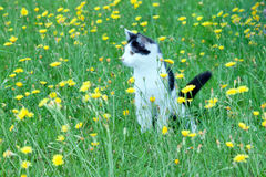 Young rustic cat on the royalty free stock photography