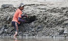 Young sabah boy digs holes from the muddy shore for crabs. stock images