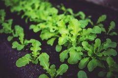 Young salad stock photo