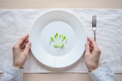 Young salad on a plate. Humorous concept of a diet. Young salad on a plate. Humorous concept of a diet Royalty Free Stock Photo