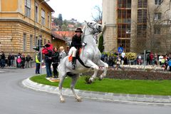 Young sat on the horse in downtown Brasov Stock Photography
