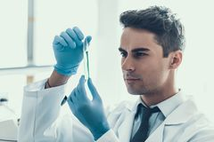 Young Scientist doing Research in Laboratory. Male Researcher wearing white Coat and Protective Gloves examining Chemical Liquid Sample in Flask. Scientist at Stock Photography
