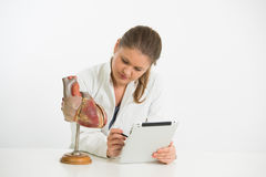 Young scientist with heart model Stock Images