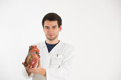 Young scientist with heart model. Young male doctor works with model of human heart Royalty Free Stock Image
