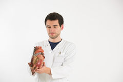 Young scientist with heart model Royalty Free Stock Photography