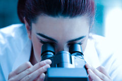 Young scientist looking through a microscope Stock Photography