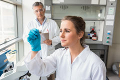 Young scientist looking at slide. At the laboratory Royalty Free Stock Photos