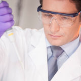 Young scientist pipetting red solution. Royalty Free Stock Image