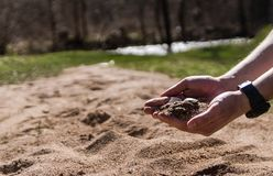 Sand and shell in scientist hand. stock photography