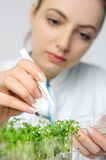 Young scientist or tech picks up cress-salad sprouts for quality Stock Photo