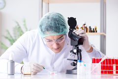 The young scientist working in the lab Royalty Free Stock Images