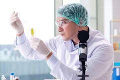 The young scientist working in the lab Royalty Free Stock Image