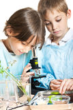 Young scientists Royalty Free Stock Images