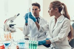 Young Scientists examining Samples in Laboratory. Researchers wearing White Coats Gloves and Protective Glasses examining Chemical Liquid Samples in Flasks Stock Images