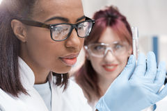 Young scientists in eyeglasses looking at test tube with reagent in chemical laboratory Stock Images