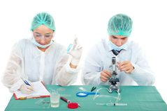 Young scientists work in laboratory Royalty Free Stock Image