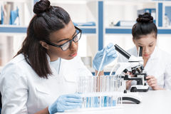 Young scientists working with microscope and test tubes in chemical laboratory royalty free stock photography